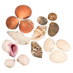 Shells - Assorted (1 lb)