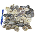 Mineral and Fossil Treasures - Agate Geodes (Size 1) (40 pcs)
