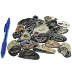 Mineral and Fossil Treasures - Agate Geodes (Size 2) (20 pcs)