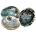 Abalone Shell - Natural Large
