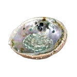 Abalone Shell - Natural Medium