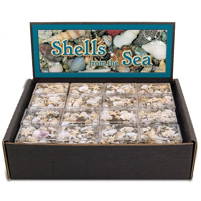 Shells From The Sea Display (48/display)