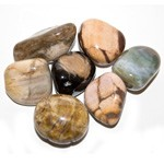 Tumbled Stone - Petrified Wood (1 lb)