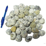 Mineral and Fossil Treasures - Discovery Geodes (Size 1) (40 pcs)