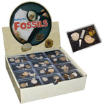 Authentic Marine Fossil Kit Display (36/display)