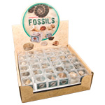 Authentic Fossil Display - Assorted (72/Display)