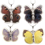 Butterfly Insect Pendant - Assorted  (12)